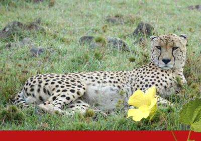 Raptor Retreat adventure cheetah