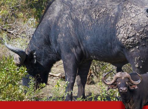 Raptor Retreat Buffalo Lodge