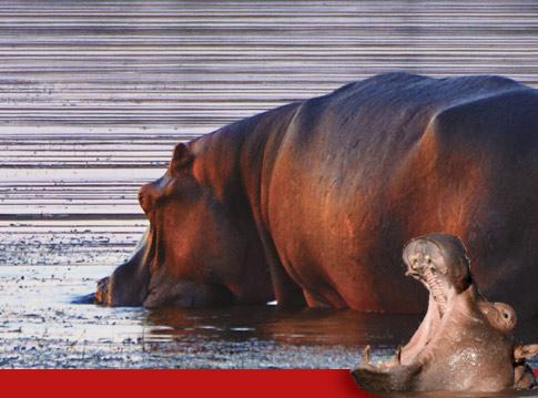 Raptor Retreat Hippo Lodge